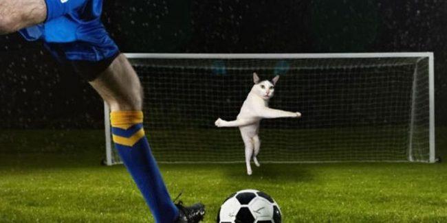 Футбол и котик