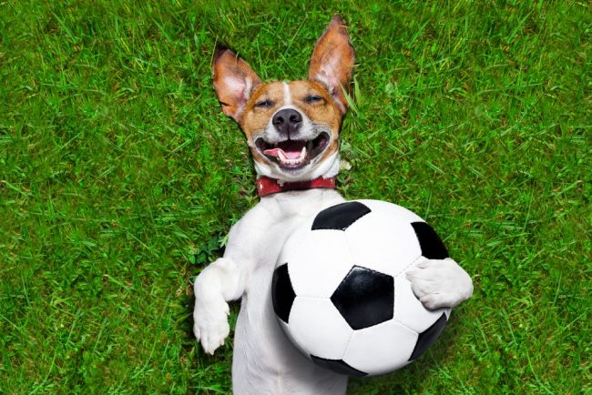 Собака улыбается